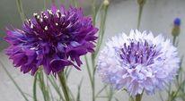 Fotografie, Blumen, Pflanzen