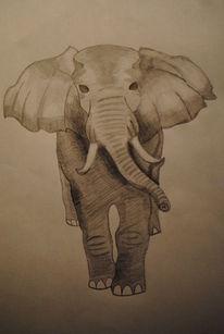 Elefant, Tiere, Bleistiftzeichnung, Zeichnung