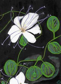 Schwarz weiß, Abstrakt, Kontrast, Kapernblüte