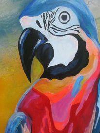 Schnabel, Bunt, Papagei, Malerei