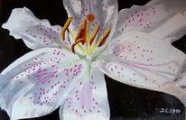 Lilie, Malerei