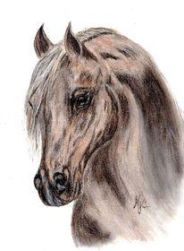Portrait, Haflinger, Araber, Zeichnung