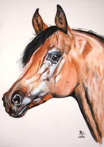 Pferde, Araber, Pferdezeichnung, Zeichnung
