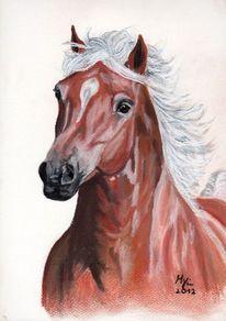 Tierportrait, Pastellmalerei, Haflinger, Zeichnung