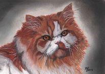 Katze, Tiere, Pastellmalerei, Augen