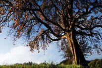 Fotografie, Baum