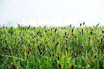 Wiese, Gras, Tau, Fotografie