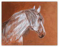 Pferde, Weisse pferde, Zeichnungen