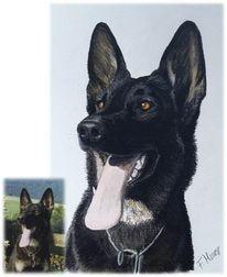 Hund, Hundeportrait, Zeichnungen, Schäferhund