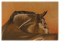 Pferde, Zeichnungen, Schau