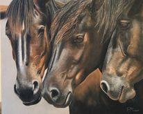 Das trio, Pferde, Pferdeportrait, Zeichnungen