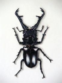 Käfer, Tiere, Hirschkäfer, Malerei