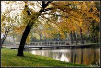 Weiher, Herbst, Fotografie