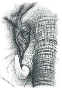 Ausdruck, Schwarz weiß, Elefant, Falten
