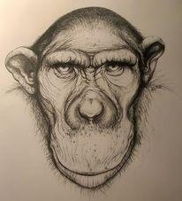 Portrait, Affe, Blick, Zeichnungen