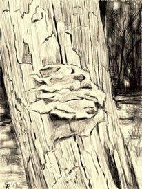 Zeichnungen, Projekt wald