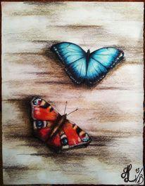 Braun, Bunt, Schmetterling, Blau
