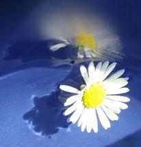 Gänseblümchen, Blau, Blumen, Fotografie