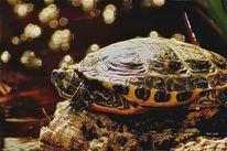 Leben, Panzer, Meeresschildkröte, Schildkröte