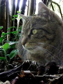 Katze, Haustier, Couchtieger, Fotografie
