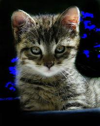 Katze, Natur, Haustier, Fotografie