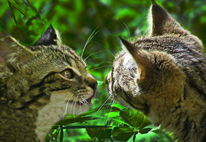 Tiere, Katze, Natur, Kater