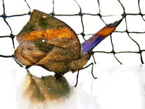 Natur, Insekten, Tiere, Schmetterling