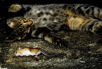 Tiere, Jagd, Katze, Beute