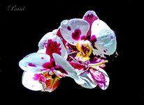 Makroaufnahme, Pflanzen, Blüte, Blumen