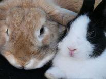 Haustier, Natur, Hase, Kaninchen