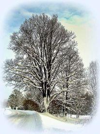 Baum, Weiß, Winter, Fotografie