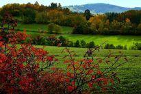 Farben, Landschaft, Wald, Herbst
