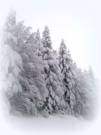 Weiß, Winter, Fotografie