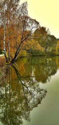 Wasser, Herbst, Spiegelung, Orange