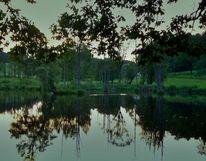 Spiegelung, Wasser, Abend, See
