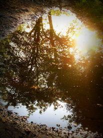 Spiegelung, Wasser, Sonne, Fotografie