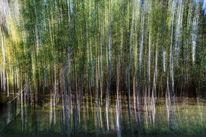 Birkenwald, Fotografie
