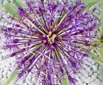 Blumen, Fotografie, Oben