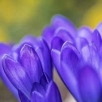 Blumen, Frühling, Digitale kunst
