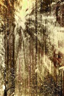 Wald, Sonne, Monochrom, Schnee