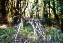 Wild, Hirsch, Holz, Wald