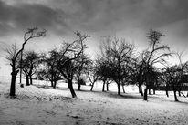 Schnee, Baum, Winterlandschaft, Fotografie