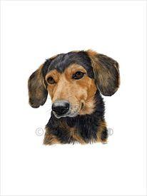 Bracke, Hund, Hundeportrait, Aquarell