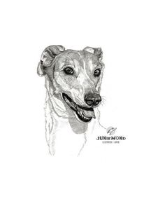 Sighthound, Hundekopf, Hundeportrait, Magyar agar