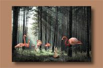 Flamingo, Baum, Wald, Licht