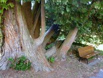Holz, Äste, Baum, Fotografie