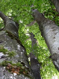 Baum, Schatten, Grün, Braun