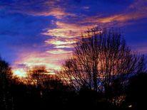 Baum, Holz, Sonne, Himmel