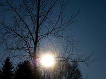 Holz, Sonne, Himmel, Baum