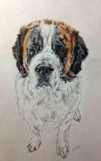 Hund, Bernhardiner, Pastellmalerei, Hundeportrait